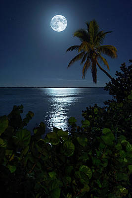 Photograph - Full Moon Over Indian Riverside Park In Jensen Beach Florida by Justin Kelefas