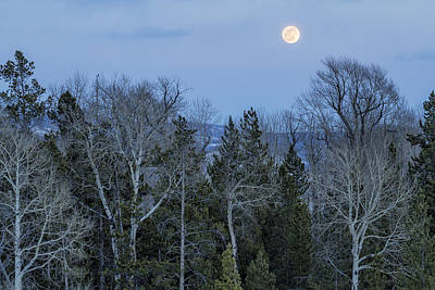Photograph - Full Moon Over Trees At Dusk by Belinda Greb