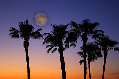 Photograph - Full Moon Palm Tree Sunset by James BO  Insogna