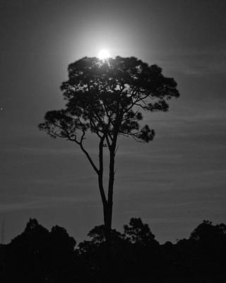 Photograph - Full Moon Pearl  On Old Longleaf Pine Setting by John Myers