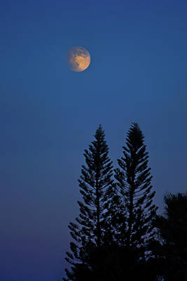 Photograph - Full Moon Rising by Mark Andrew Thomas
