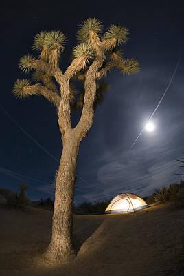 Full Moon Rising Over A Joshua Tree Art Print by Rich Reid