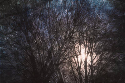 Bare Trees Photograph - Full Moon Rising by Scott Norris