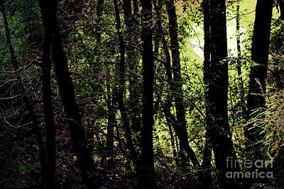Photograph - Full Moon Through The Forest Floor . 7d5429 by Wingsdomain Art and Photography