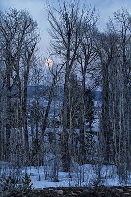 Photograph - Full Moon Through Trees At Dusk by Belinda Greb