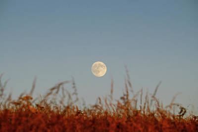 Photograph - Full Moon by Will Gudgeon