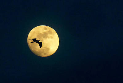 Full Moon With Bird Original by Allan Einhorn