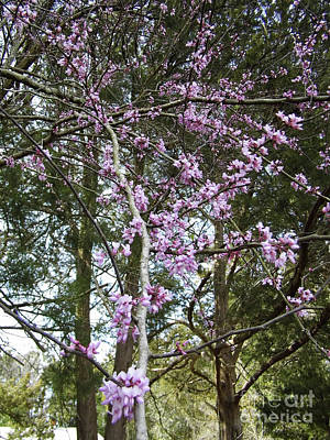 Photograph - Full Of Pink Blossoms by D Hackett
