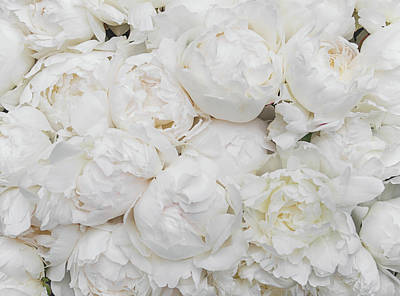 Photograph - Full Peonies by Lenny Carter