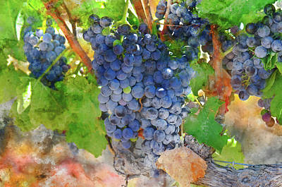 Photograph - Full Red Grapes On The Vine by Brandon Bourdages
