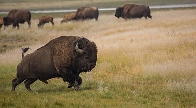 Bull Creek Photograph - Full Throttle by Sandy Sisti