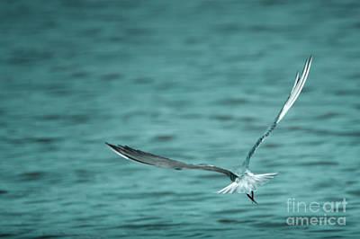 Photograph - Fumarel by Hernan Bua
