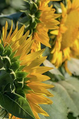 Photograph - Fun Flowers by Deb Buchanan