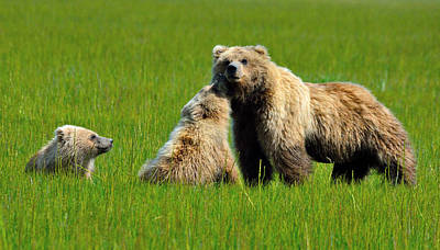 Nature At Its Best Photograph - Fun In The Family Of Bears by Patricia Twardzik