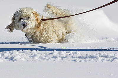 Photograph - Fun In The Snow by Tatiana Travelways