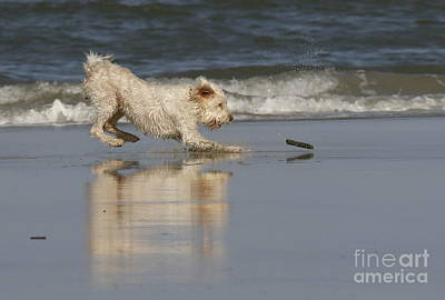 Photograph - Fun In The Surf by Myrna Bradshaw