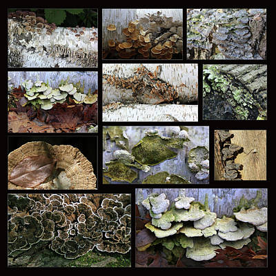 Photograph - Fun With Fungi Black Background by Mary Bedy