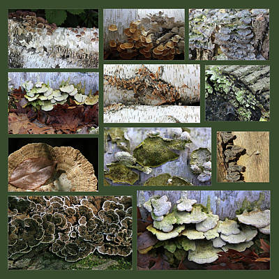 Photograph - Fun With Fungi Green Background by Mary Bedy