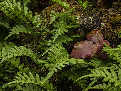 Pteridophyte Photograph - Fungi And Fern by Jean Noren