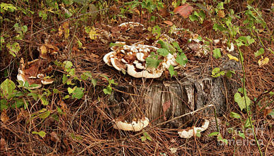Photograph - Fungi And Needles And Tree Trunk  Oh My by Carol Lynn Coronios
