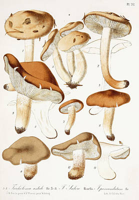 Vegetables Drawing - Fungi by Jean-Baptiste Barla
