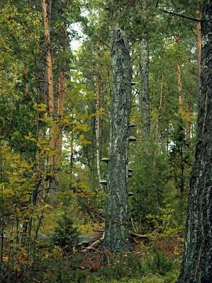 Photograph - Fungi Tree 1 by Sami Tiainen