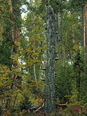Photograph - Fungi Tree 2 by Sami Tiainen