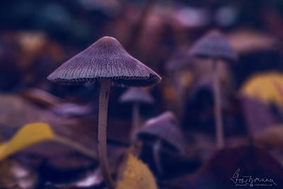 Photograph - Fungi World by Gene Garnace