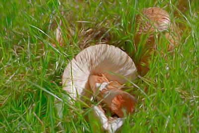 Photograph - Fungus 2015 by Leif Sohlman