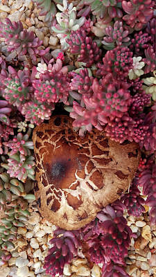 Photograph - Fungus And Succulents by Nareeta Martin
