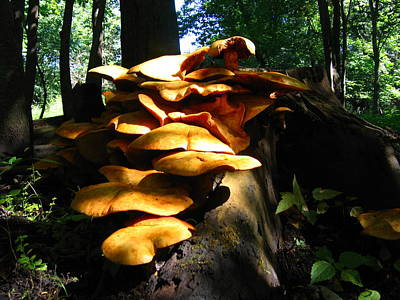 Art Print featuring the photograph Fungus Colony 23 by Maciek Froncisz
