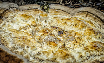 Photograph - Fungus Pizza by Kathleen K Parker