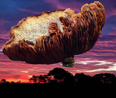 Photograph - Fungus Rules by Richard Goldman