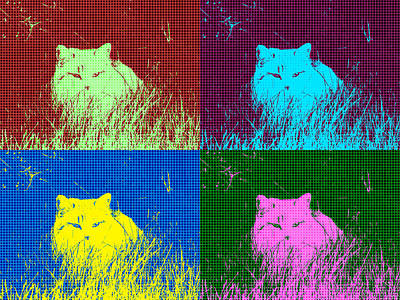 Photograph - Funky Cat by Kyle West