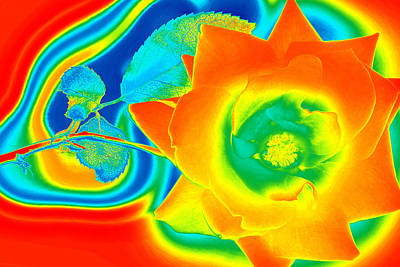Multihued Photograph - Funky Rose by Panos Trivoulides