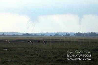 Photograph - Funnel Clouds Over Wild Ponies by Captain Debbie Ritter