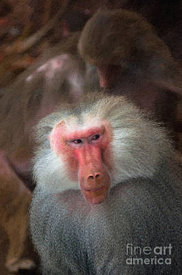 Photograph - Funny Baboon by Andrew Michael