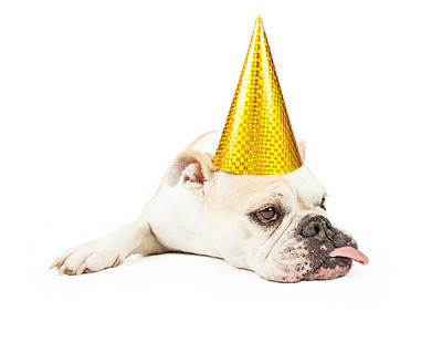 Licking Photograph - Funny Bulldog Wearing A Yellow Party Hat  by Susan Schmitz