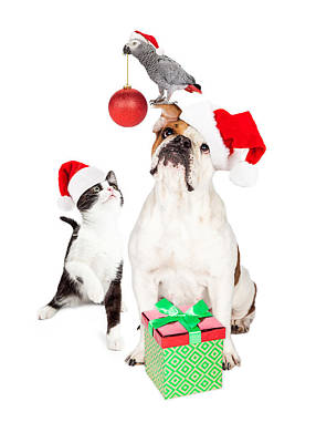 Photograph - Funny Cat Dog And Bird Christmas Composite by Susan Schmitz