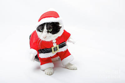 Photograph - funny Christmas Cat by Benny Marty