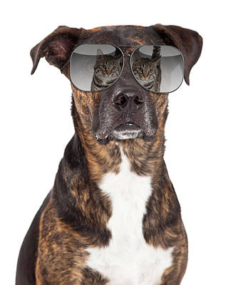 Funny Dog With Cat Reflection In Sunglasses Art Print by Susan Schmitz