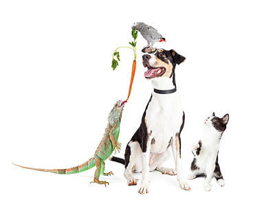 Funny Domestic Pets Interacting Together Art Print by Susan Schmitz