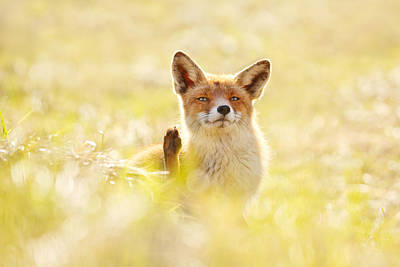 Funny Fox Is Funny Art Print by Roeselien Raimond