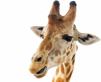 Photograph - Funny Giraffe by Jennifer