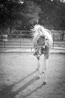 Photograph - Funny Horse In Black And White by Kelly Hazel
