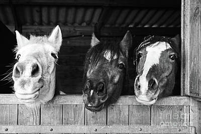 Comics Royalty-Free and Rights-Managed Images - Funny horses by Delphimages Photo Creations