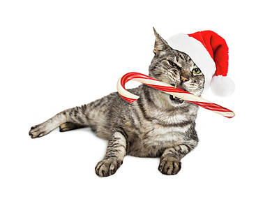 Photograph - Funny Santa Cat With Candy Cane by Susan Schmitz