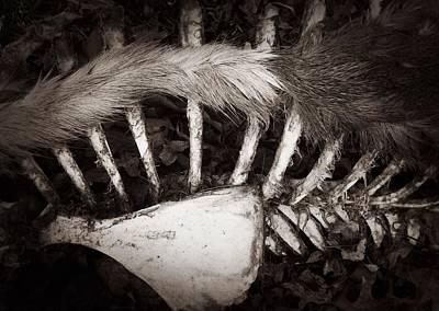 Fur And Bones Art Print