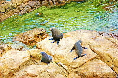 Seal Photograph - Fur Seals In Otago Bay New Zealand by Laura D Young