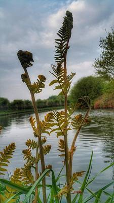 Photograph - Furled by Isabella F Abbie Shores